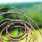 Spiral of Time by Veronica Maur'er