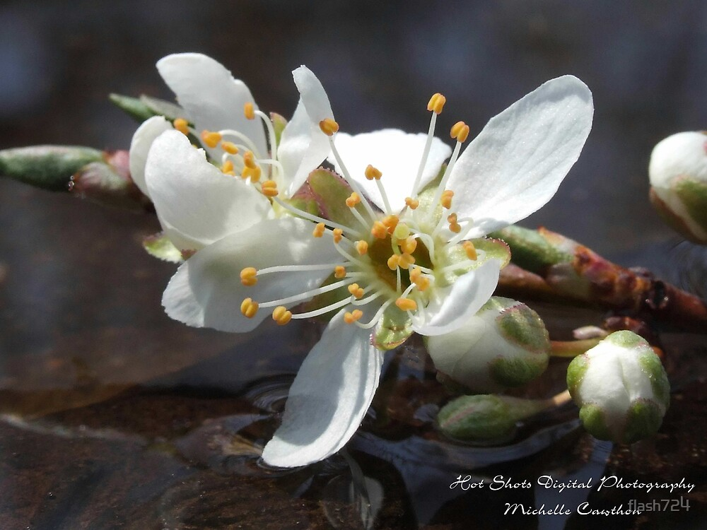 Spring Blossom 2 by flash724