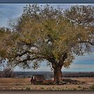 Beneath the Sheltering Tree by Sheryl Gerhard