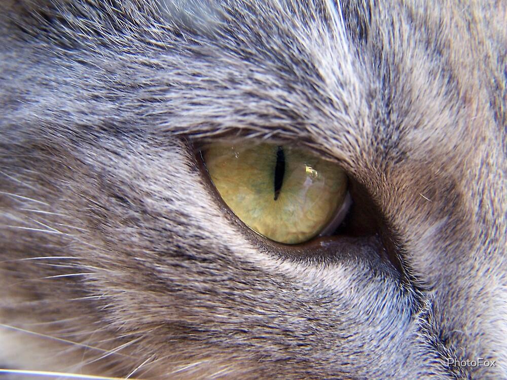 Cat's Eye by PhotoFox