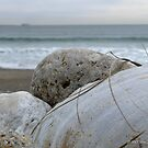 Shells on the Cold March Beach  by Jack McCabe