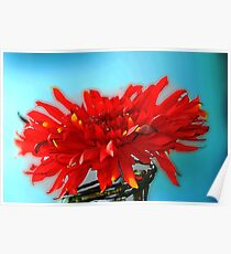 Red Flower in a Jar Poster