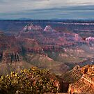 Grand Canyon North Rim, AZ by Linda Sparks