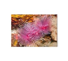 Quot Christmas Tree Worms Quot By Marcel Botman Redbubble