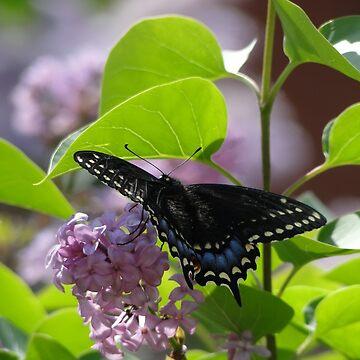 Butterfly On Lilacs by JuliaAjandi