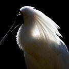 Spoonbill by margotk
