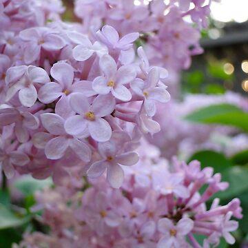 Lilacs At Sunset I by JuliaAjandi