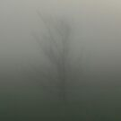 Tree in the Mist by MSArt