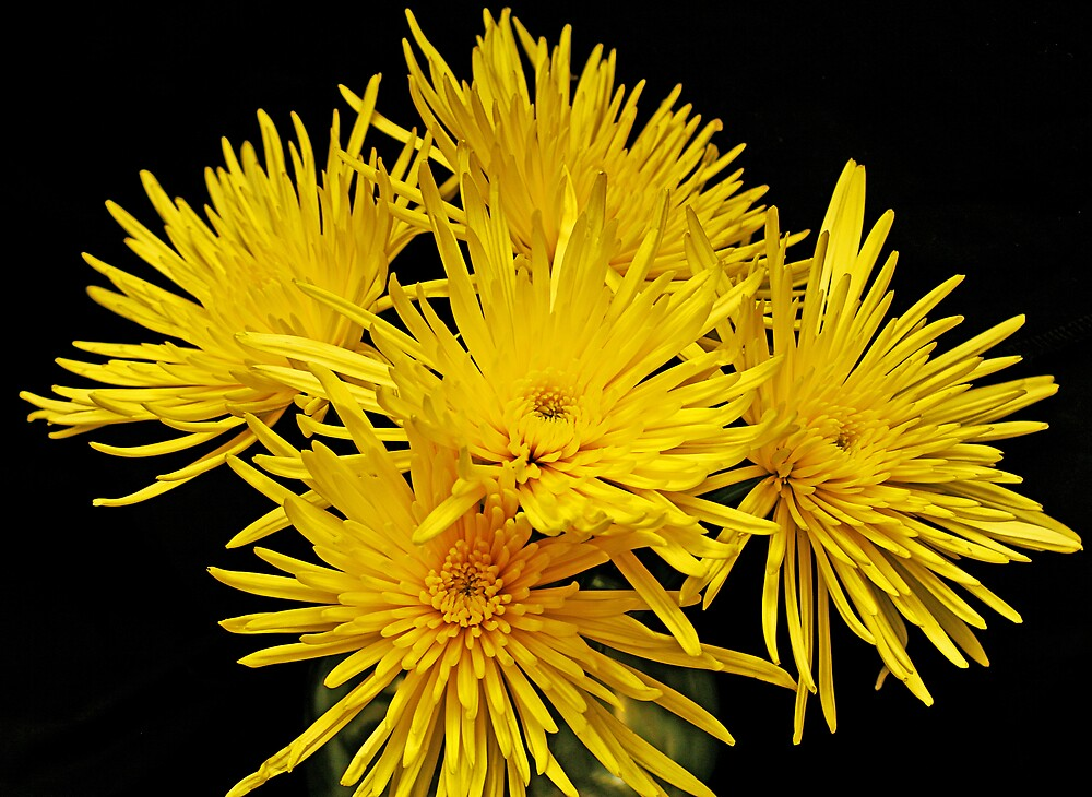 A Burst of Yellow by Swede