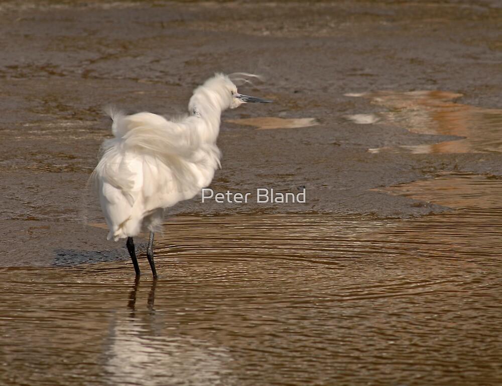 Windblown Egret by Peter Bland