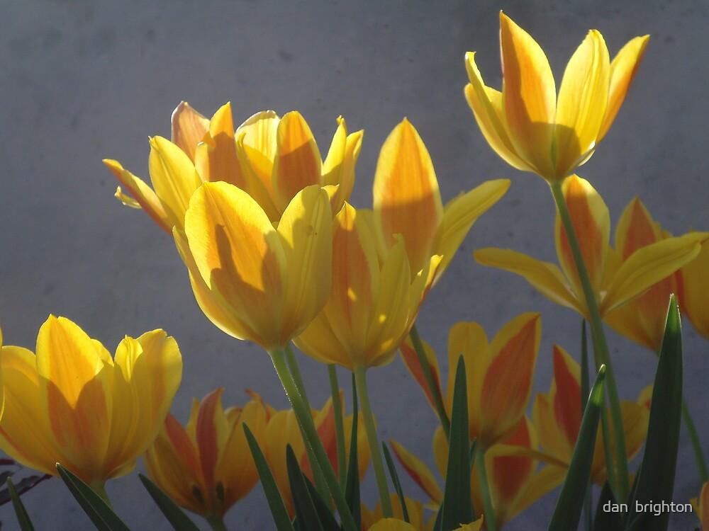 Yellow flowers by dan  brighton