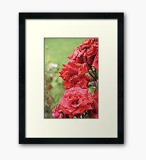 Full Bloom Framed Print