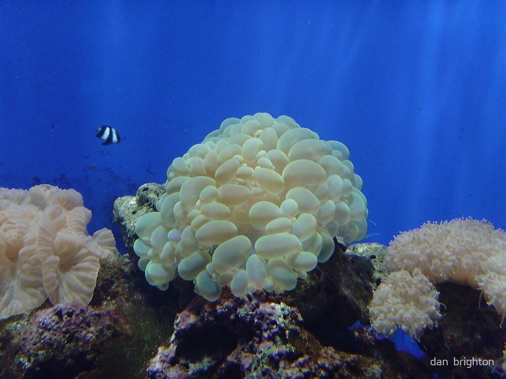Sea life by dan  brighton