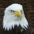 Eagle Eye by CinB