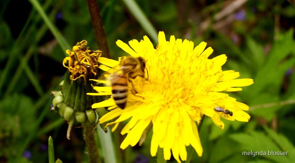 yellow jacket by melynda blosser
