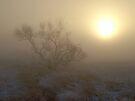 Shrouded Dawn by Dawne Olson
