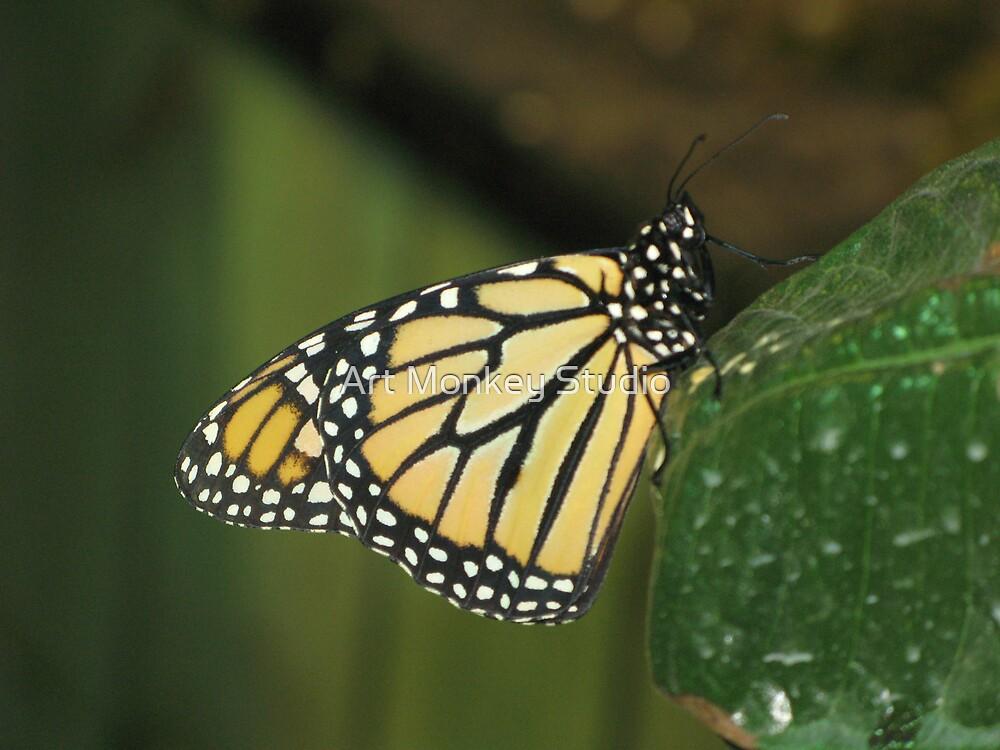 Butterfly 3 by Dan Perez