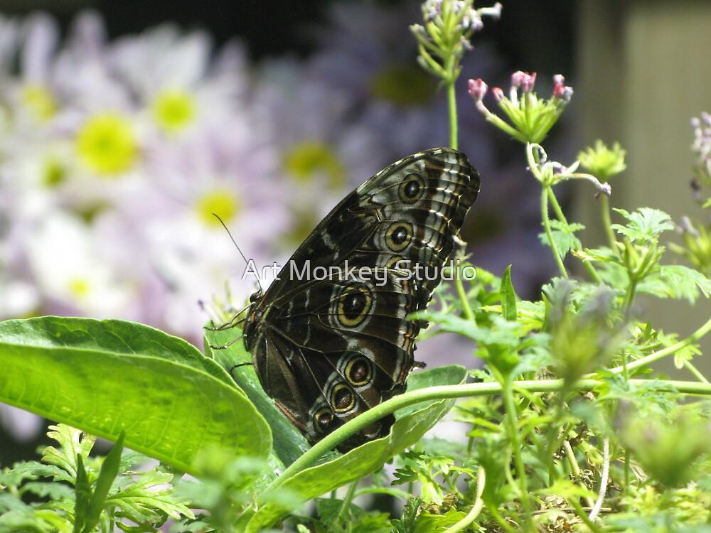 Butterfly 4 by Dan Perez