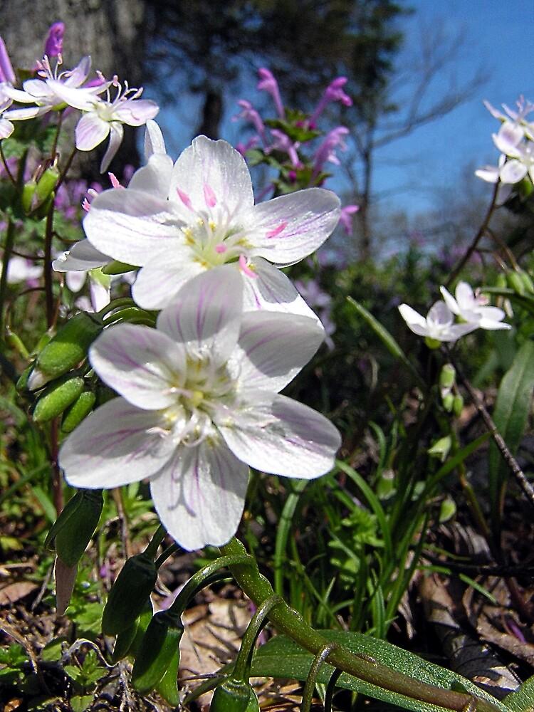 ~ Spring Wildflowers ~ by Brion Marcum