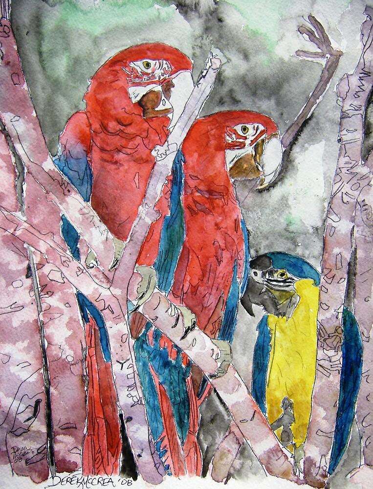 3 parrots wildlife bird tropical painting by derekmccrea