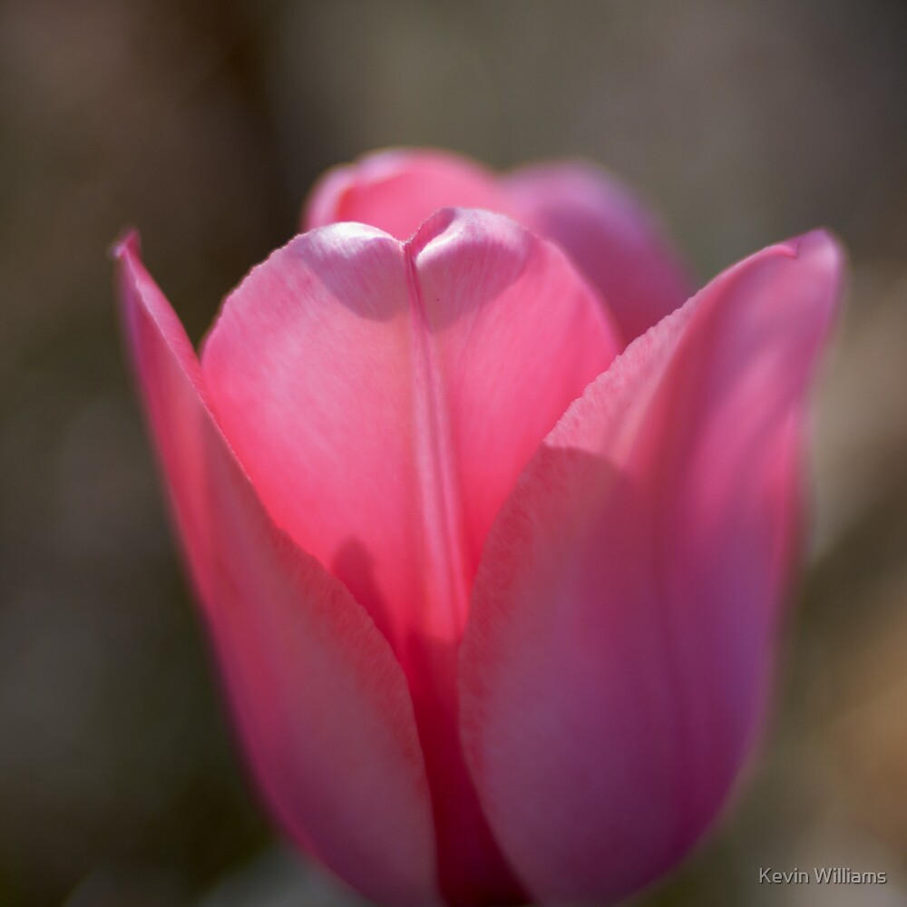 pink by Kevin Williams