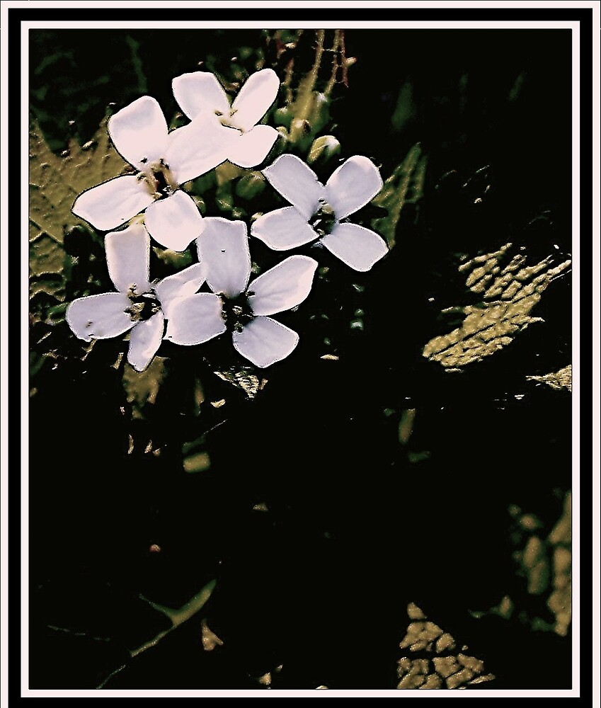Bouquet of White Flowers by Judi Taylor