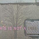 This is Not a Tree by Talisa