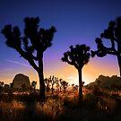 Joshua Tree National Park Series - Being Dusk by Philip James Filia