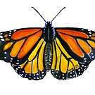 Monarch Butterfly by SurlyAmy