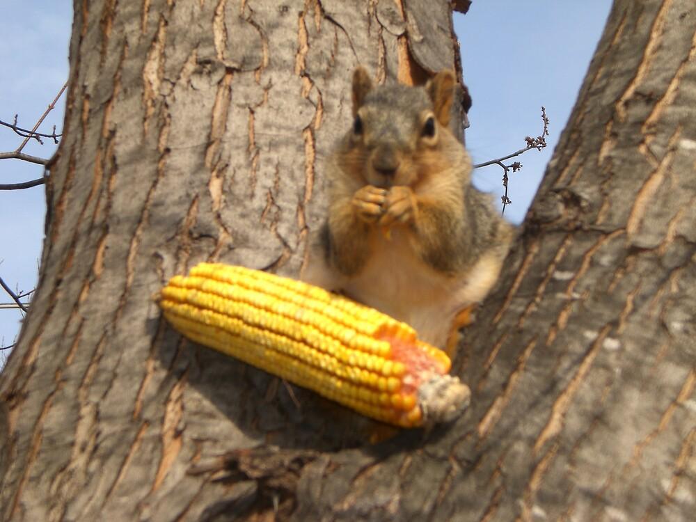 little squirrel by Ellaine Walker
