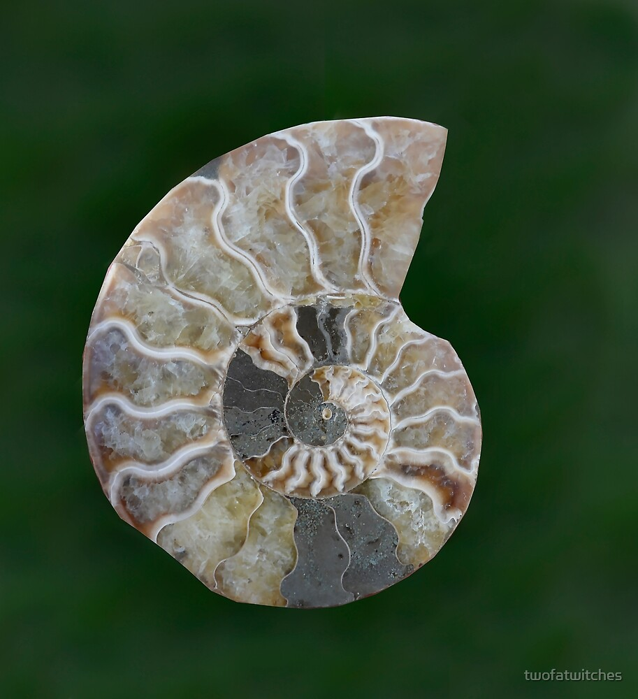 Sacred Geometry - Jade Ammonite Fossil 1 by twofatwitches