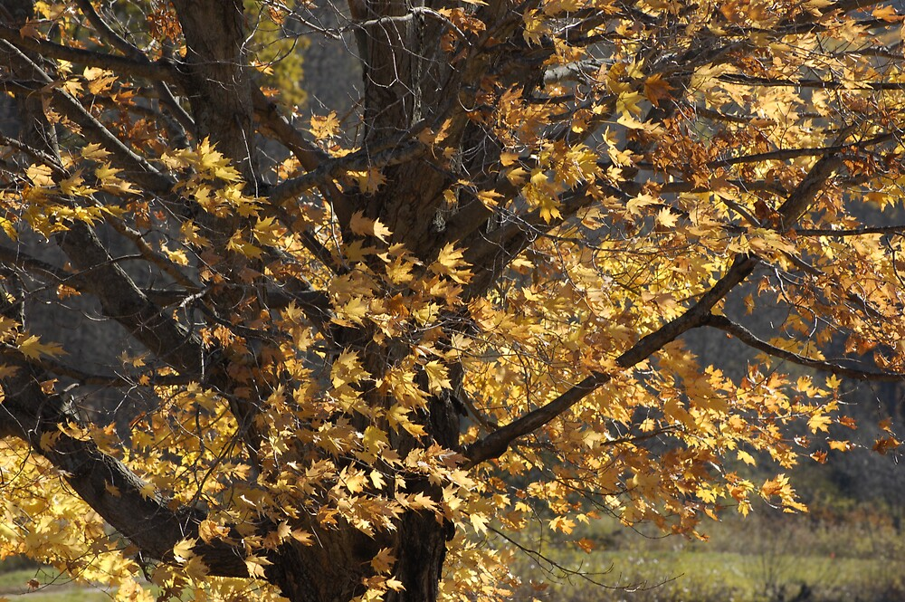 Golden Leaves in the Breeze by Ronald Smith