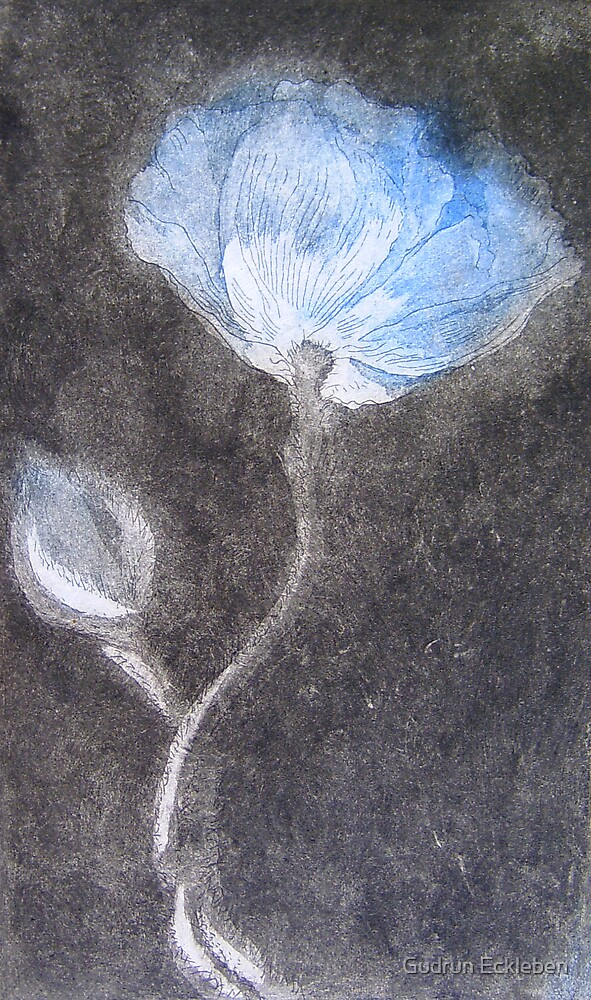 Blue Poppy by Gudrun Eckleben