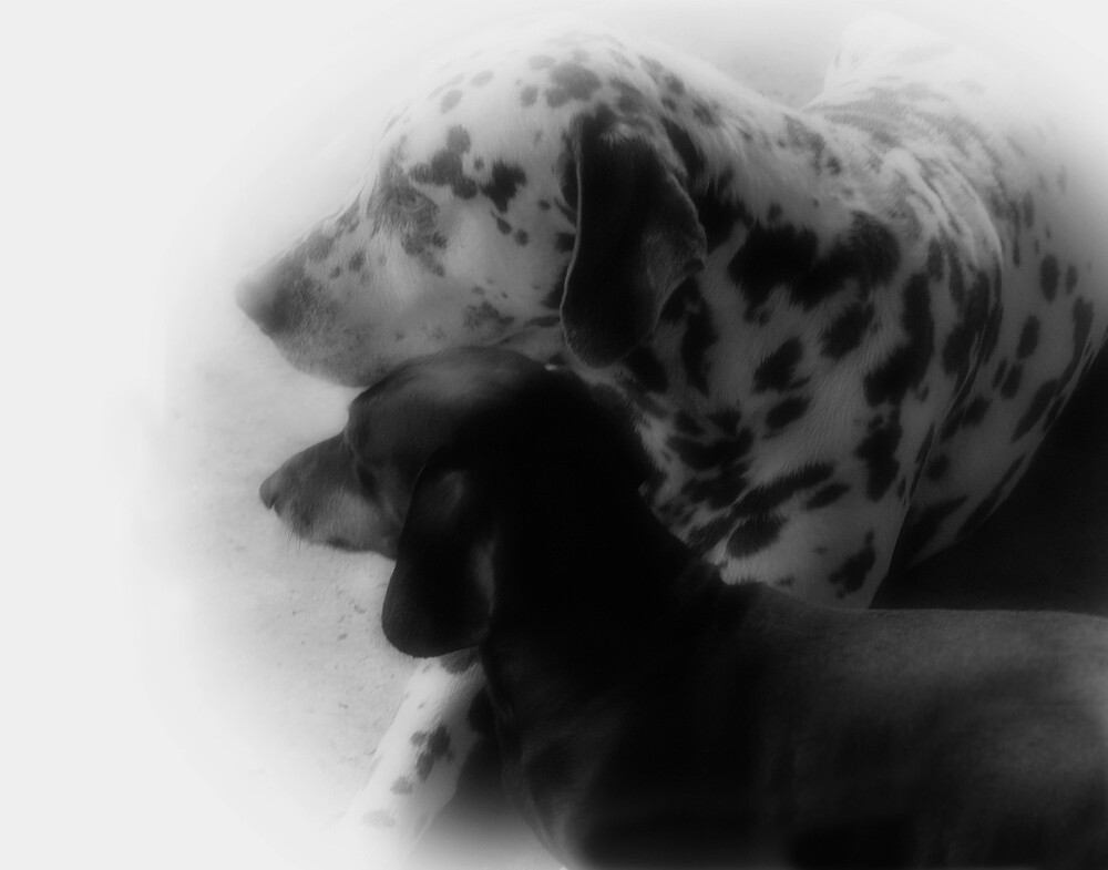 Friends Forever by AcadianaGal