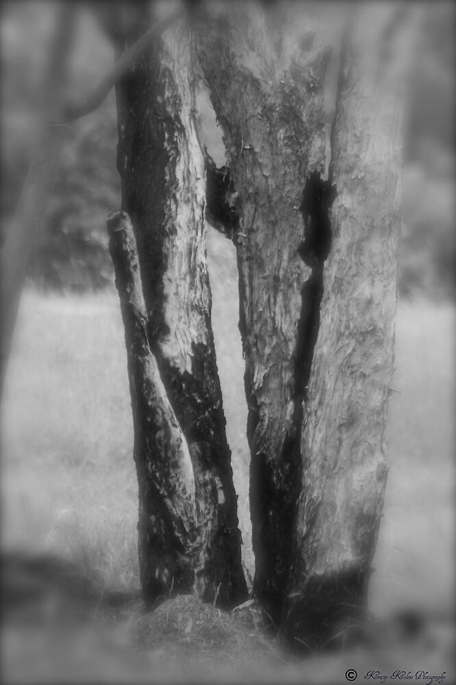 Burn Tree by Jayde Allen