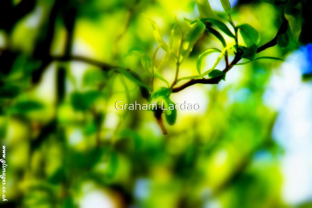 Greenery by Graham Lacdao