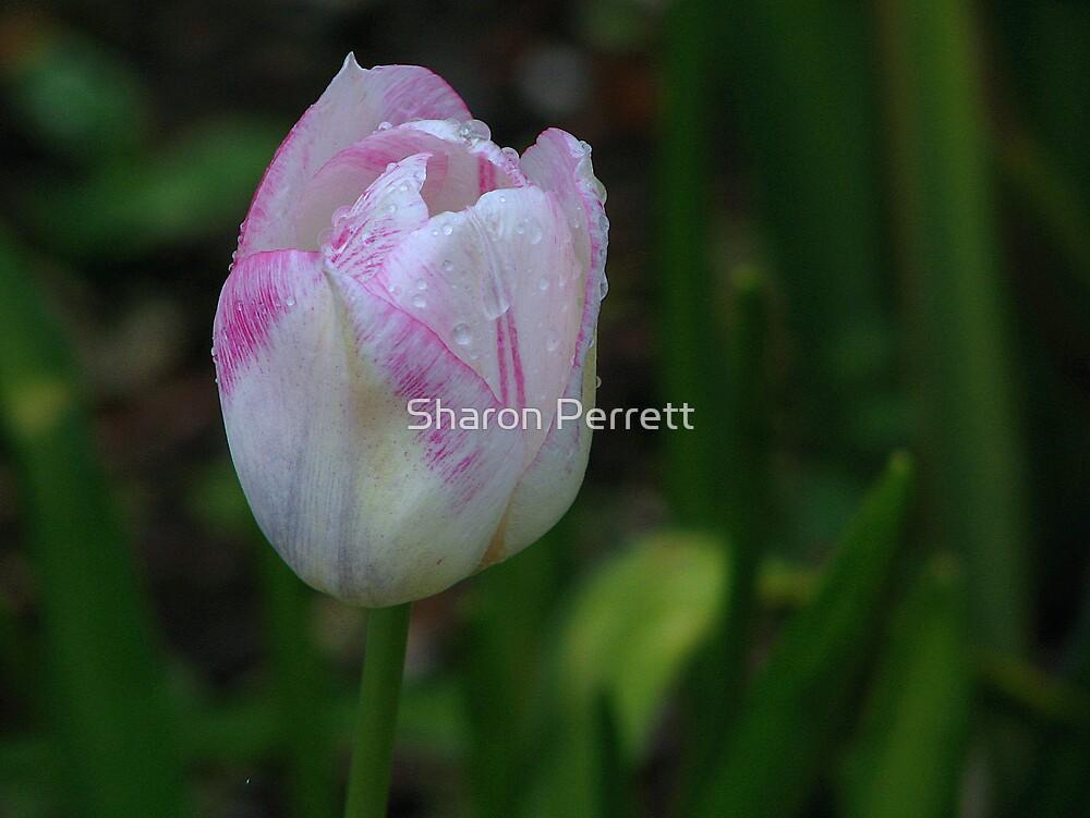 Pretty in Pink by Sharon Perrett