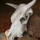 Cow Skull by Kylie  Metz