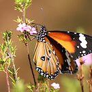 Butterfly by Kylie  Metz