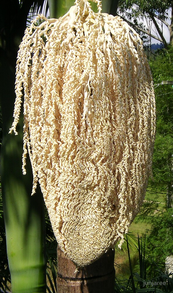 An opening Palmflower ( photo) by junjaree
