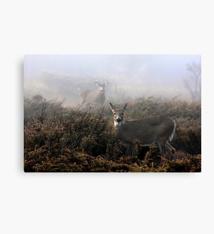 The rut is on! - White-tailed deer in fog Canvas Print
