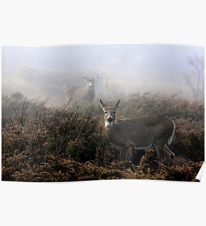 The rut is on! - White-tailed deer in fog Poster
