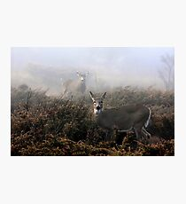 The rut is on! - White-tailed deer in fog Photographic Print