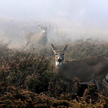 The rut is on! - White-tailed deer in fog by darby8