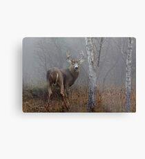 Buck - White-tailed deer Metal Print