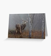 Buck - White-tailed deer Greeting Card
