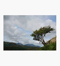 Windswept Rowan Tree Photographic Print