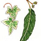 Falling leaves - botanical illustration by Maree Clarkson