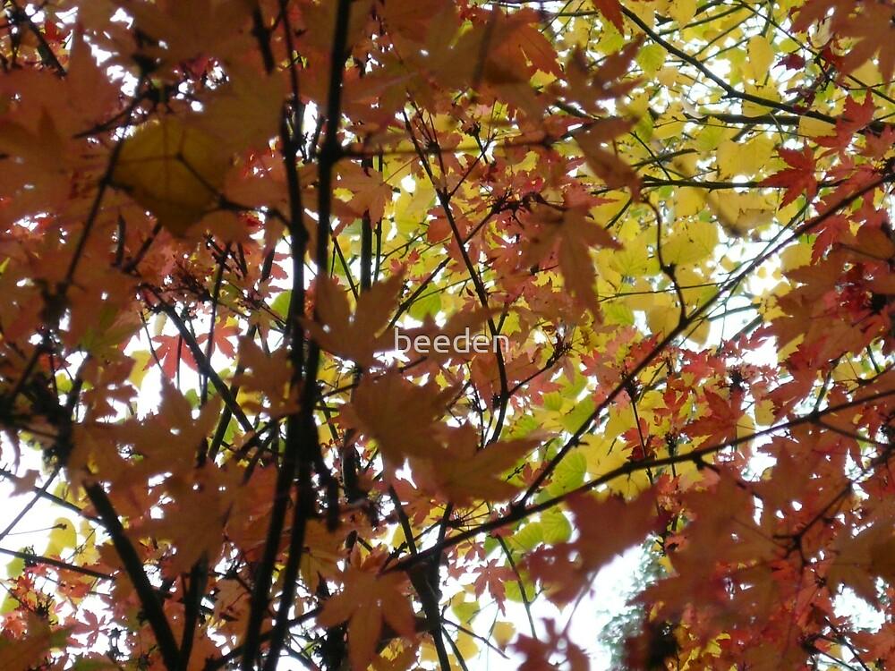 Australian Autumn - 6 by beeden