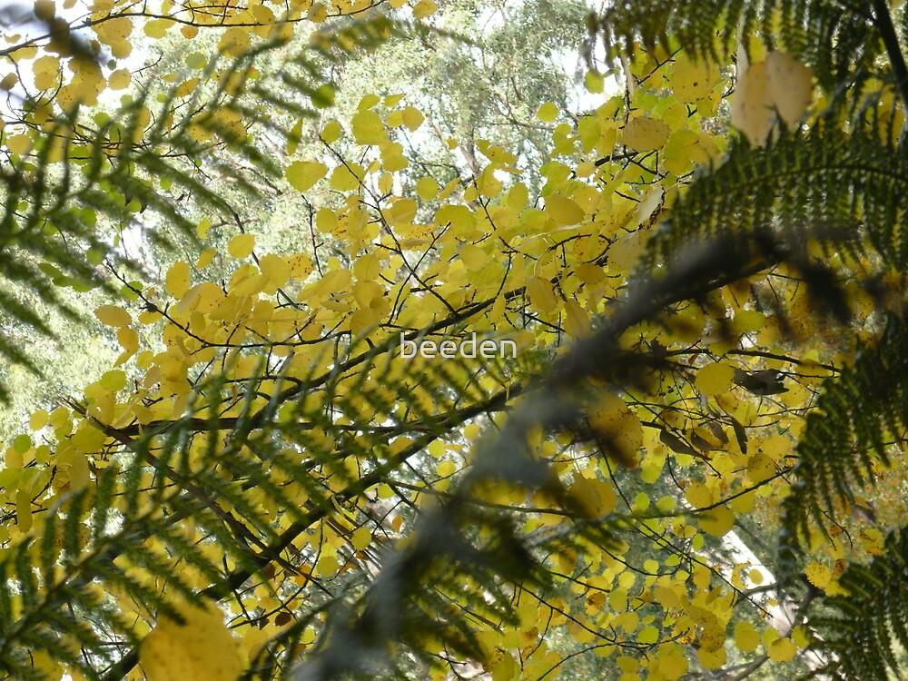Australian Autumn - 8 by beeden